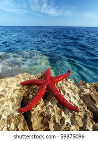 beautiful blue Adriatic sea with red starfish in foreground