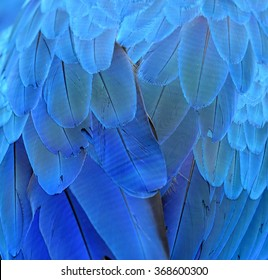 Beautiful blue background taken from blue and gold macaw bird's feathers, fascinated blue texture
