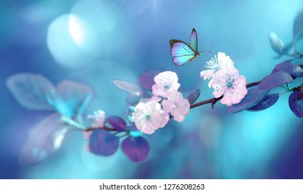Beautiful blue butterfly in flight and branch of flowering apricot tree in spring at Sunrise on light blue and violet background macro. Amazing elegant artistic image nature in spring.