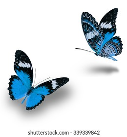 Beautiful Blue butterfly flying up