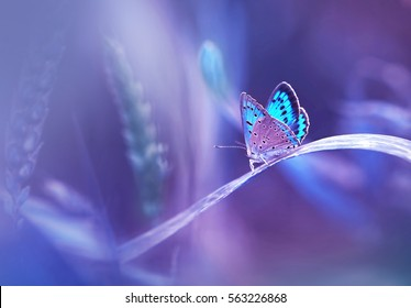 Beautiful blue butterfly on blade of grass in nature with a soft focus on blurred purple background beautiful bokeh. Magic dreamy artistic image for wallpaper template background design card