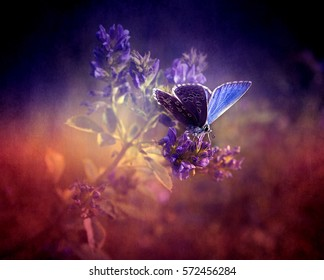 Beautiful blue butterfly on lavender wildflower in summer / spring