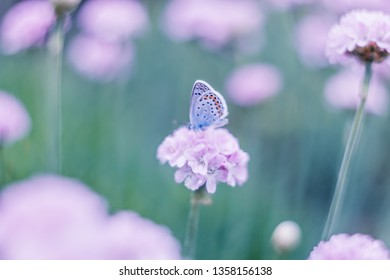 Beautiful blue butterfly on pink flower with blurred nature background. Soft focus macro artistic lens. Wild life picture