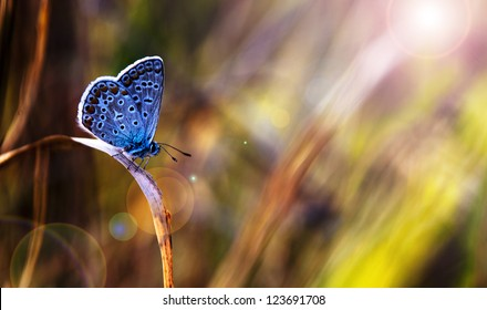 Beautiful blue butterfly in sunset