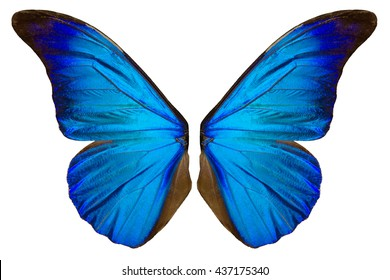 Beautiful blue butterfly wings isolated on white background.