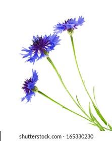 Beautiful blue cornflower isolated on white background