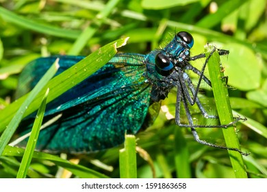 Beautiful blue dragonfly on grass