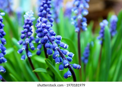 Beautiful blue flowers as a background image.