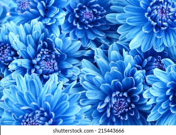 Beautiful blue flowers, close-up