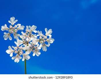 Beautiful blue flowers, close-up. Spring summer border template floral background. Light air delicate artistic image, free space. Blue flower background : close up of blue flower, aster with blue peta