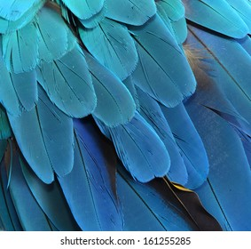 Beautiful Blue Macaw Feathers
