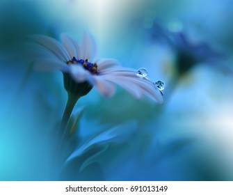Beautiful Blue Nature Background.Tranquil Macro Photo. Amazing Spring Flower.Creative Design.Magic Light.Extreme Close up Artistic Photography.Conceptual Abstract Fantasy Floral Art.Love,romance,drops