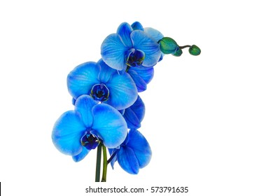 Beautiful blue orchid, isolated on white