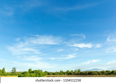 beautiful blue sky with cloud and tree.