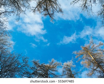 Beautiful blue sky with fluffy clouds framed by the bare, slightly iced tree tops of a lovely European winter forest. Ideal for adding motivational text messages.