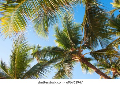 Beautiful blue sky and palm view