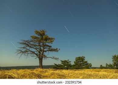 Beautiful blue sky in stars with Tree  Long exposure 1200 Sn