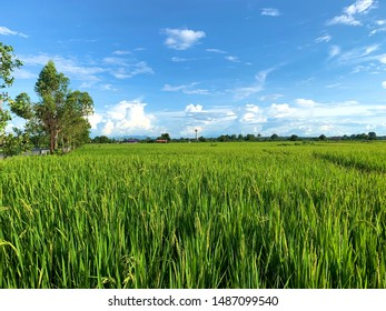 Beautiful blue sky with tiny cloud and rice field