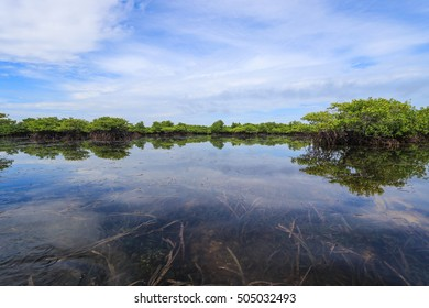 Beautiful blue sky and tropical mangrove forest at coast of Philippines