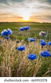 Beautiful blue summer flowers with views over Holland's flat landscape. The last rays of the sun give the picture a warm pleasant atmosphere of a romantic summer evening