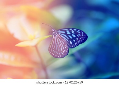 Beautiful blue tropical butterfly on blurred a background