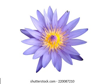 Beautiful blue water lily isolated on white background