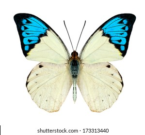 Beautiful Blue and White Butterfly