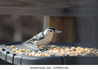 A beautiful blue and white nuthatch eating birdseed on a sunny day.