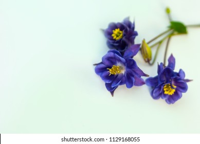 beautiful blue wild flowers on light green background