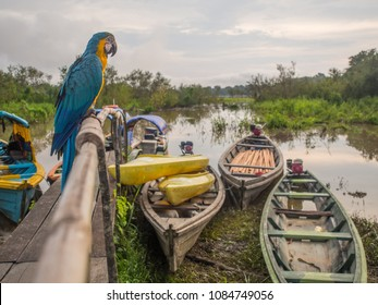 Beautiful, blue and yellow parrot (macaw) on the background of wooden boat in the Amazon jungle