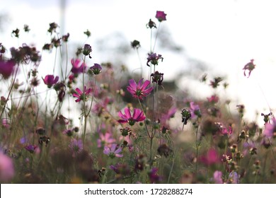 Beautiful blurred background  of colouful flower