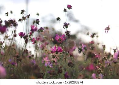 美しいぼかした背景にカラフルな花