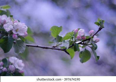 Beautiful blurred flowers in the morning mist, selective focus on the buds