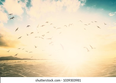 Beautiful bokeh beach in sunset summer time with birds background concept freedom financial travel wellbeing, happy new year 2019 retreat background.