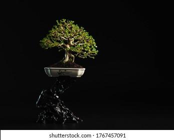 Bonsai Wallpapers Images Stock Photos Vectors Shutterstock