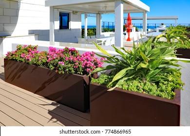 Beautiful bougainvillea in bloom, in a brown fiberglass planter on an oceanfront outdoor terrace.