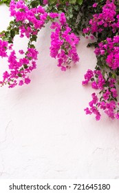 beautiful bougainvillea flowers on typical spanish house - white wall background