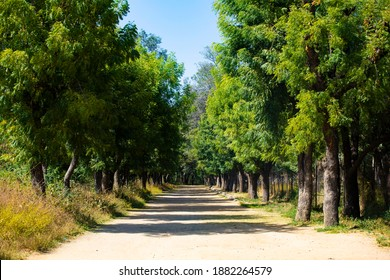A beautiful boulevard rood with green trees on both sides of the path.
