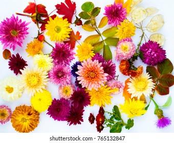 Beautiful bouquet of chrysanthemums close-up