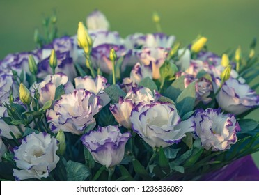Beautiful bouquet of Eustoma, white petals with violet borders at soft light background on sunset. Lisianthus flowers close-up for your floral decor or florist shop.