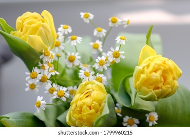 Beautiful bouquet of flowers: yellow tulip, daffodils, chamomile. colorful spring flowers background. Blooming flowers concept. Happy mother's day