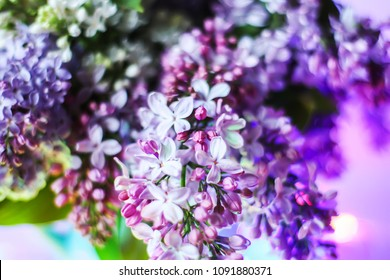 Beautiful bouquet of fragrant purple flowers in blue ceramics vase on light background. Syringa vulgaris or lilacs plant.