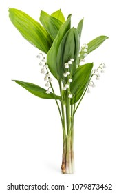 Beautiful bouquet of lilies of the valley flowers, Convallaria Majalis, with green leaves isolated on white background