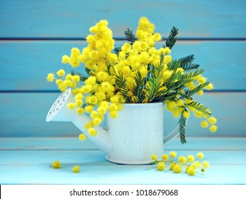 Beautiful bouquet of mimosa flowers on blue background. Springtime.