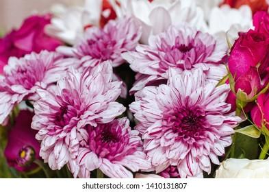 Beautiful bouquet of pink chrysanthemums, flowers, summer