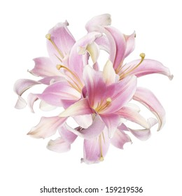The beautiful bouquet pink lily on a white background