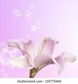 The beautiful bouquet pink lily.Flower card