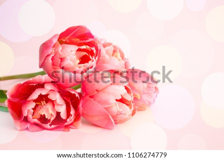 Beautiful bouquet of pink peony flowering tulips on pink background. Holiday greeting card with bokeh.