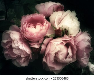 Beautiful bouquet of pink rose flowers on a dark background, soft and romantic vintage filter, looking like an old painting