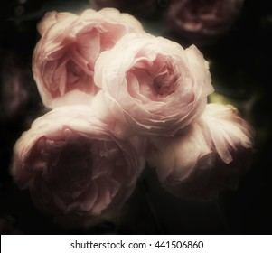 Beautiful bouquet of pink roses on a dark background, soft and romantic glamour filter, vintage flowers looking like an old painting